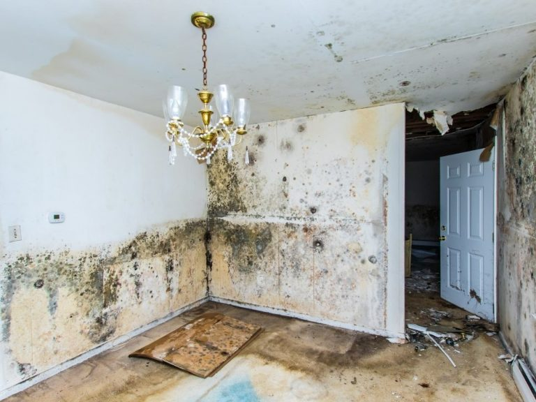 Health Hazards Of Unattended Mold In Your Home