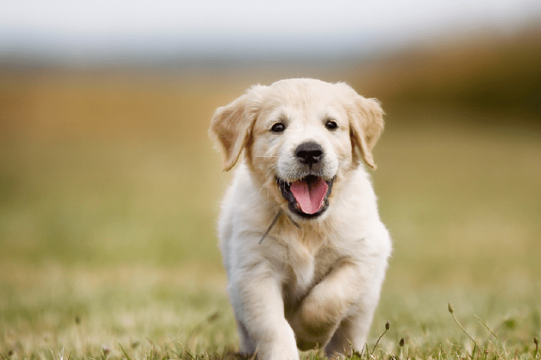 The Reasons Why We Love Puppy Schools