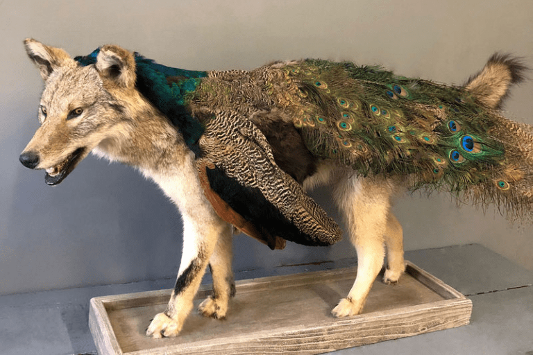 How to Obtain Animals for Taxidermy